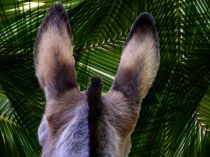 palm donkey view