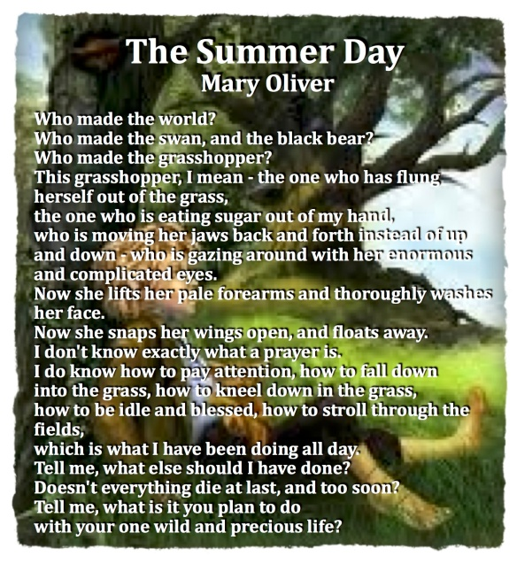 Summer Day Mary Oliver pastorDawn